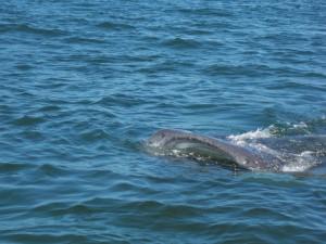 Wow, a whale shark!